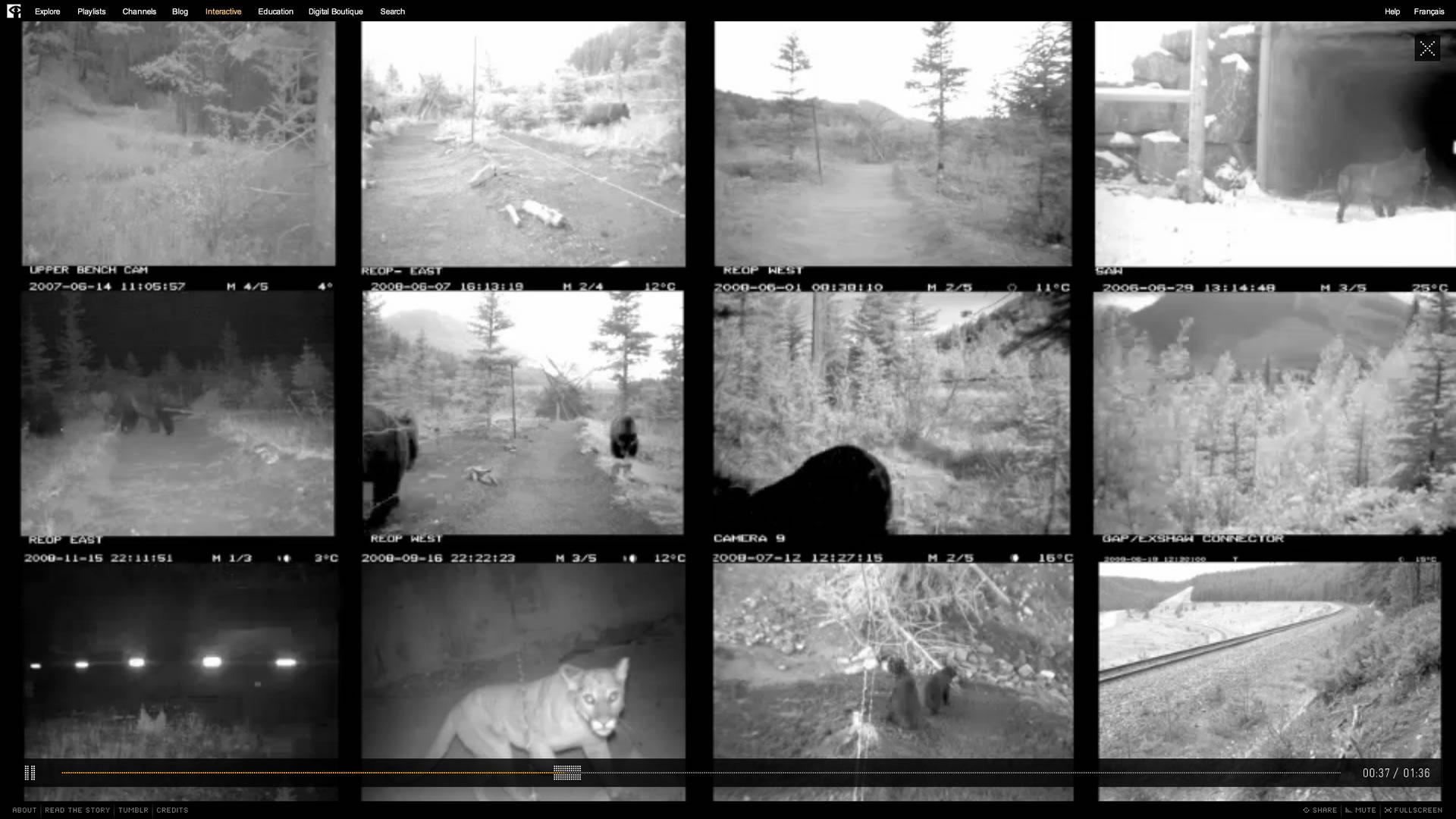 Bear 71 - Surveillance Wall
